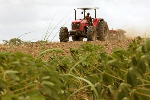 Parceria para cultivo de macaxeira, peixes e mel são algumas de destaque na região