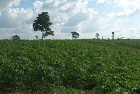 agriculturapara