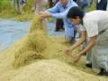 colheita-lav-comunitária-santo-ant.-de-goiás-1-11-03-03-225x300