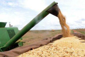 safra de grãos FOTO EBC