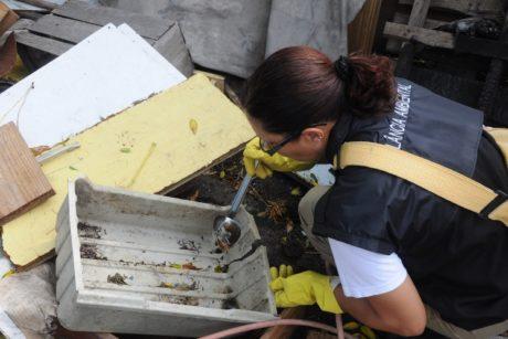 dengue-pelotas-foto-prefeitura